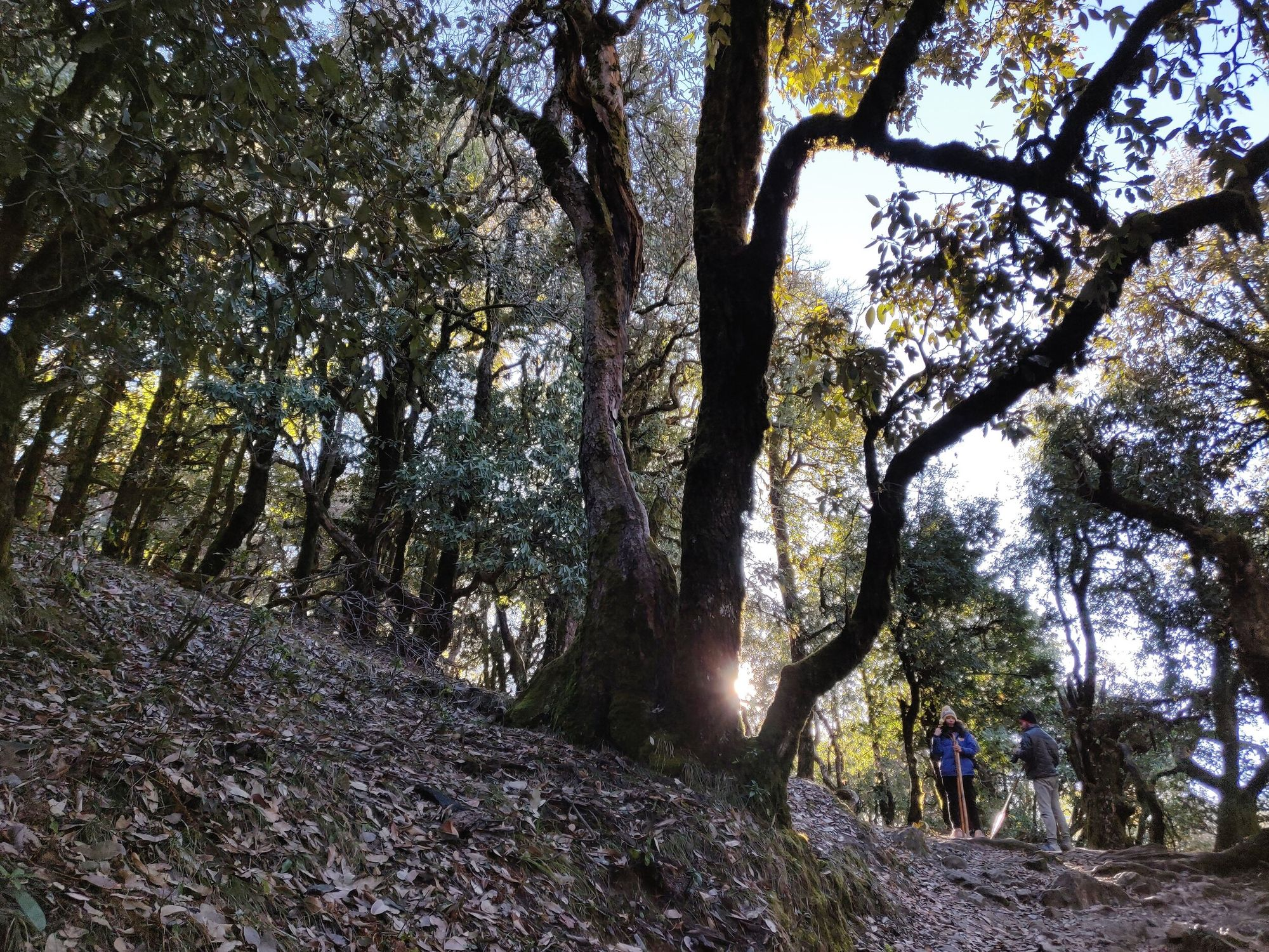 Sunlight filtering through dense forest and its warmth spreading on our face was the most enchanting experience of the entire trek